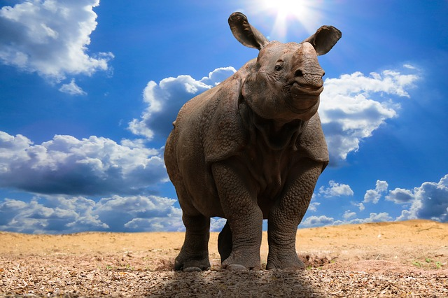 Animals, Nature, Rhino, Pachyderm, Climate Change, Sun