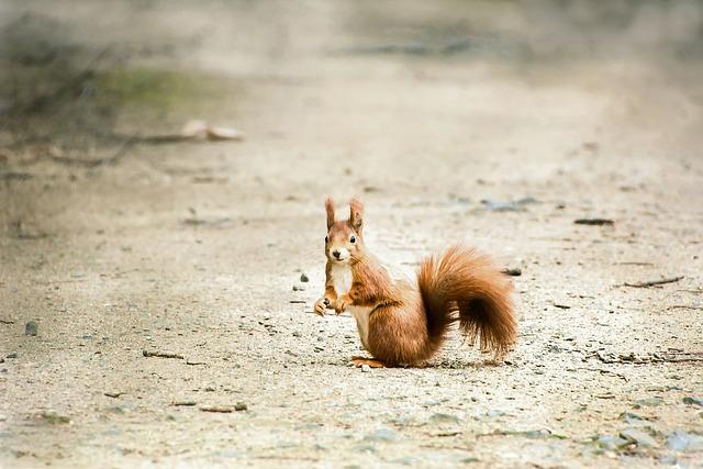 Nature, Animal, Animal World, Mammal, Wild, Sand, Park
