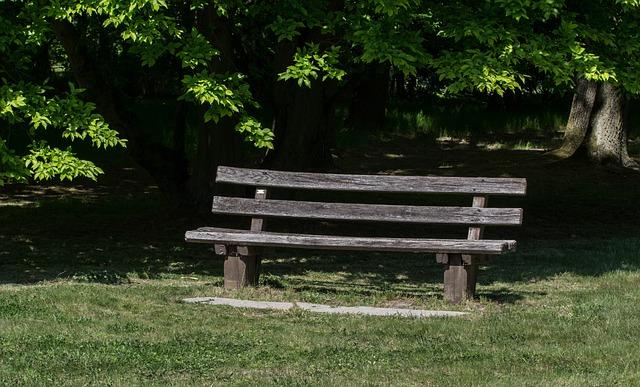 Bank, Wood, Nature, Grass, Tree, Park, Summer, Empty