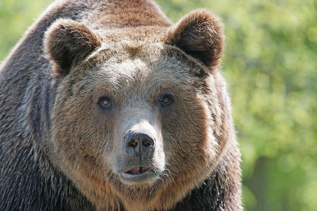 Brown Bear, Master Petz, Nature Park, Bear