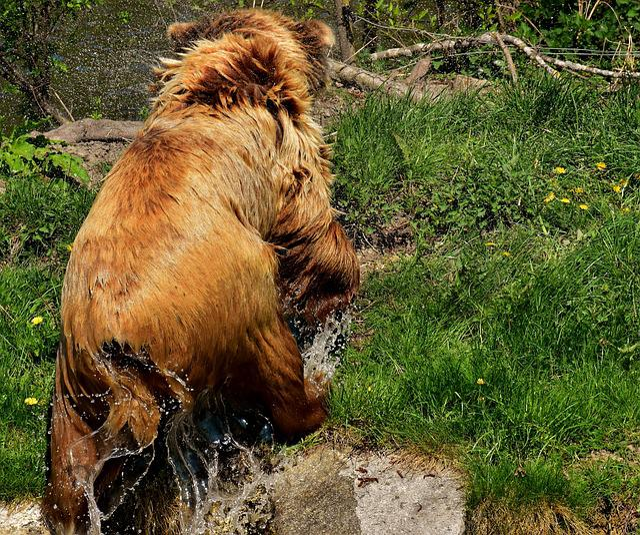 European Brown Bear, Brown Bear, Nature Park