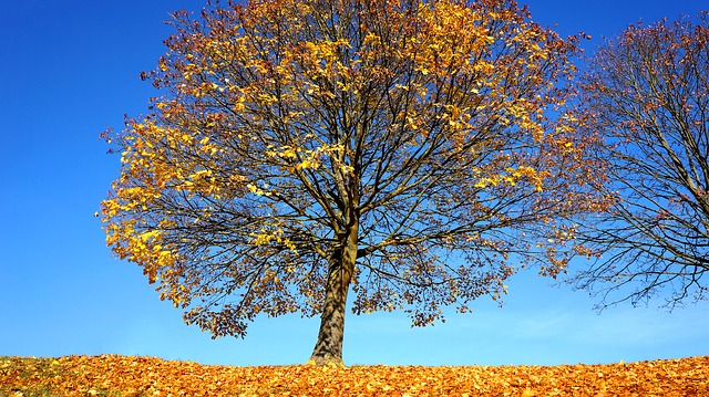 Autumn, Tree, Fall, Landscape, Park, Forest, Nature