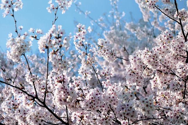 Blooming, Spring, Flowers, Pink, Nature, Park, Garden