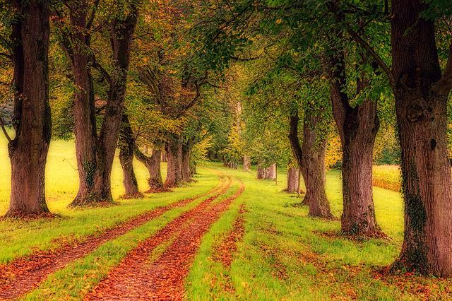 Tree Lined Path, Park, Trees, Avenue, Nature, Landscape