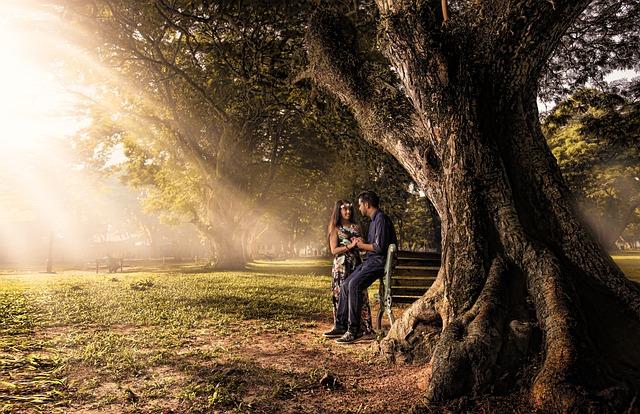 Tree, Nature, Outdoors, Landscape, Wood, Park, Dawn