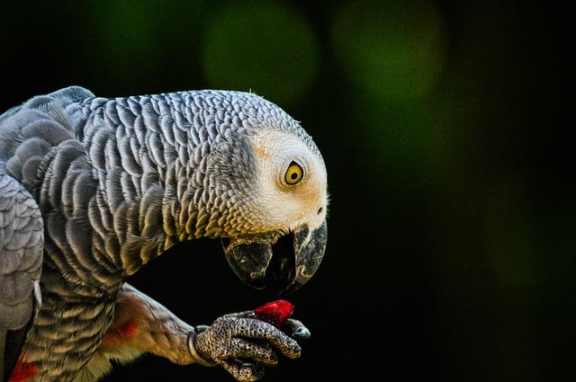 Parrot, Bird, Animal, Pet, Beak, Nature, Feather, Macaw