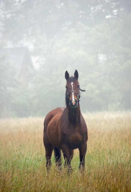 Horse, Nature, Pasture
