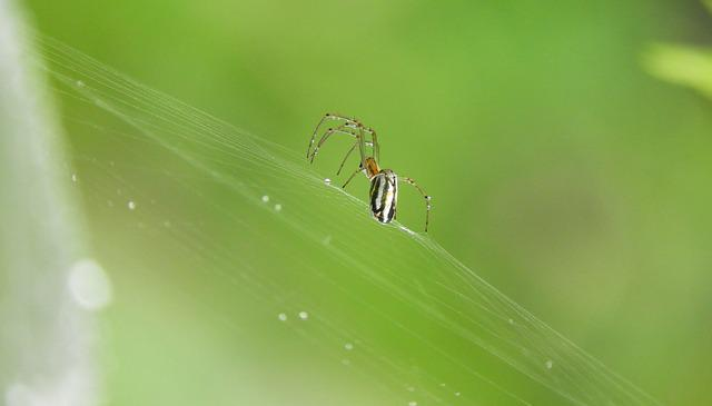 Spider, Nature, Rocio, Insect, Pearl
