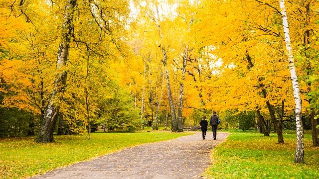 Free Photo Nature People Yellow Orange Autumn Season Fall
