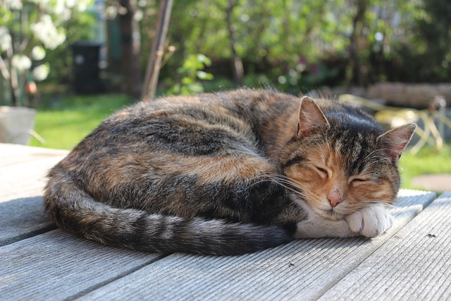 Cat, Animal, Pet, Sleep, Nature