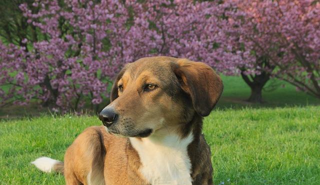 Dog, Spring, Hybrid, Pet, Nature, Meadow, Petals