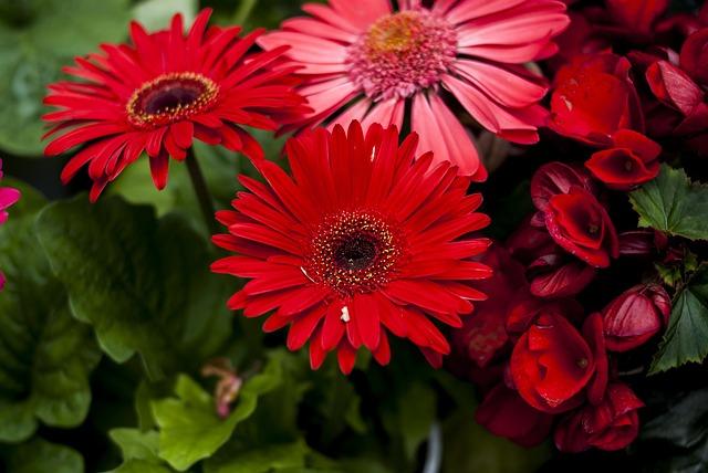 Beauty Flower, Flower, Plant, Nature, Petal