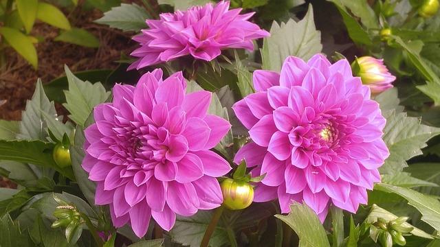 Flower, Nature, Plant, Garden, Bloom, Petal, Summer