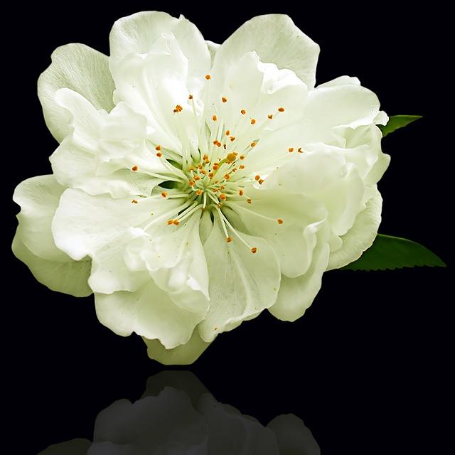 Flower, Plant, Petal, Nature, Floral, White Flower