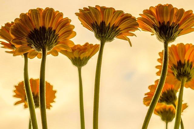 Flowers, Plant, Blossom, Bloom, Nature, Spring, Petals