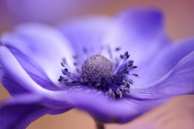 Flower, Nature, Blur, Plant, Summer, Anemone, Blossom