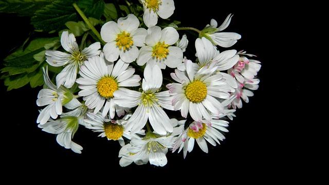 Meadow, Flowers, Bouquet, Nature, Plant