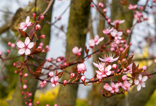 Flower, Nature, Tree, Plant, Branch, Blossom, Bloom