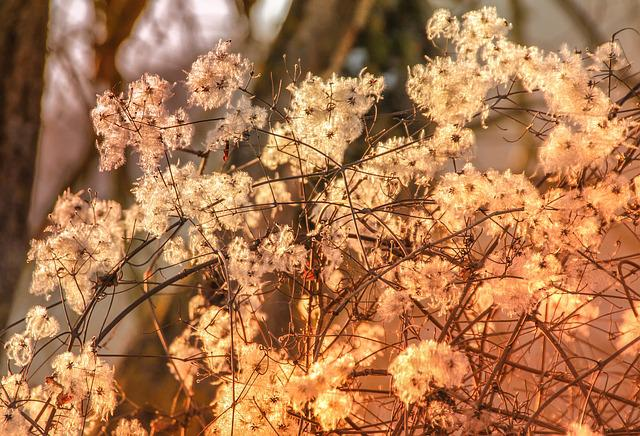 Nature, Tree, Season, Plant, Bush, White, Brown, Branch