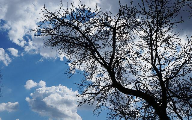Sky, Clouds, Blue, Tree, Nature, Plant, Branches