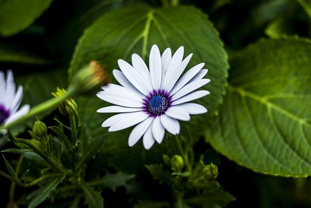 Beauty Flower, Nature, Flower, Plant, Leaf