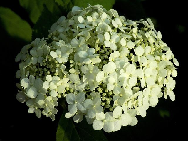Plant, Nature, Flower, Garden