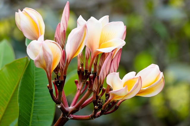 Nature, Flower, Plant, Garden, The Tropical, Blooming