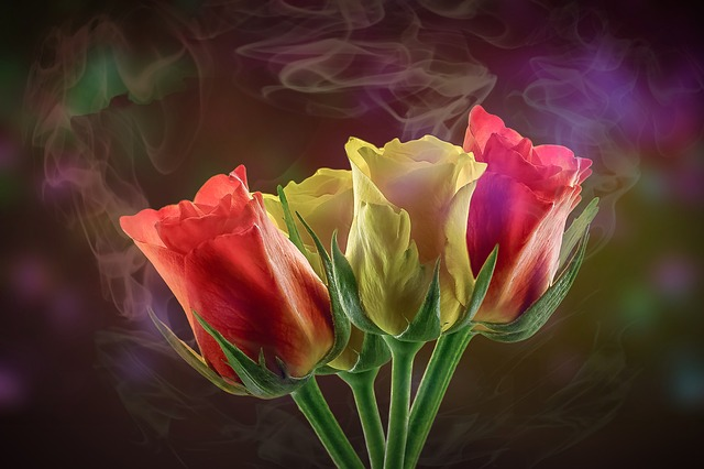Flower, Nature, Plant, Roses, Leaf, Background, Smoke