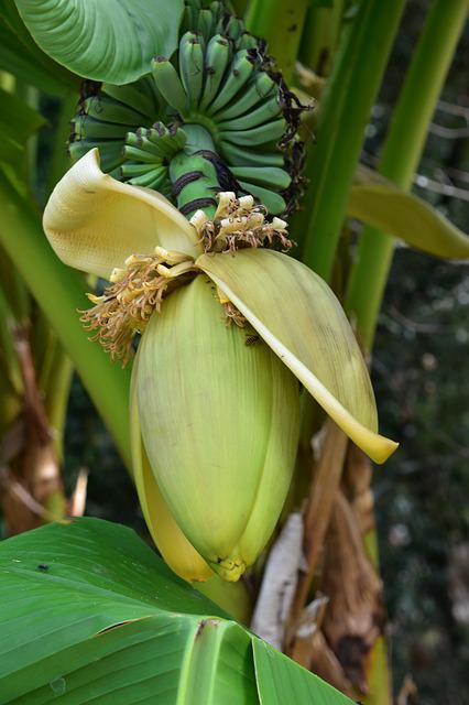 Plant, Leaf, Nature, Banana, Tropical