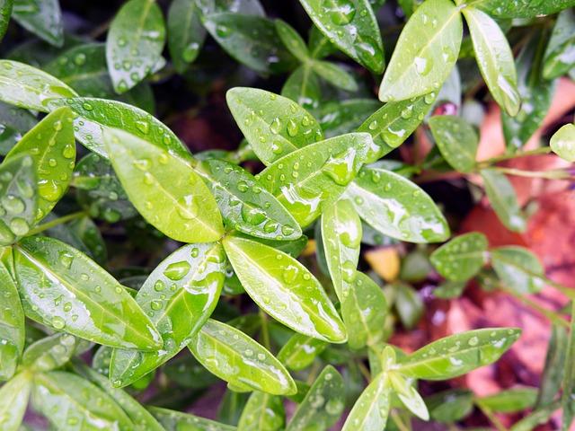 Nature, Plant, Leaves, Oleander, Wet, Rain, Water