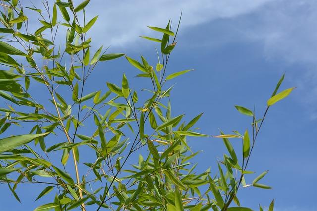 Bamboo, Au Gratin, Plant Shooting, Nature