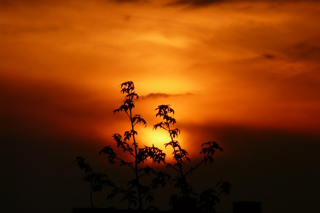 Sunset, Landscape, Plant, Nature