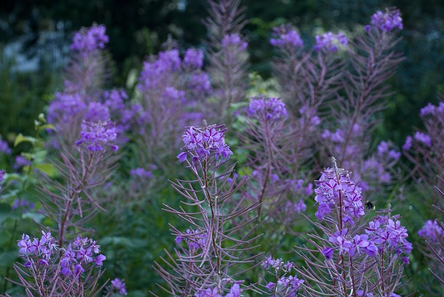Flower, Nature, Plant, Color, Rallarros, Sweden, Summer