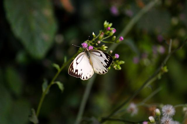 Butterfly, Nature, Love, Summer, Wildlife, Plant
