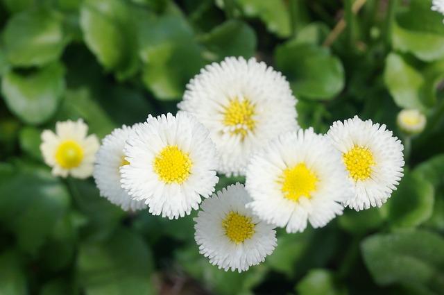 Daisy, Yellow, Yellow Flower, Nature, Plants, Flowers
