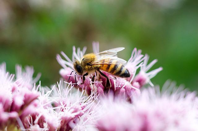 Bee, Blossom, Bloom, Nature, Pollination, Sprinkle
