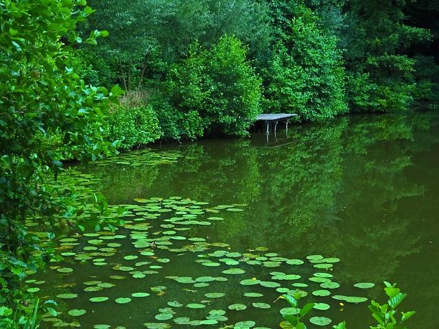 Pond, Lake, Water Lilies, Pools, Fishing Pond, Nature