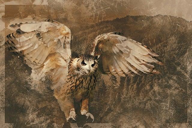 Owl, Wildlife, Bird, Nature, Predator, Portrait, Flight