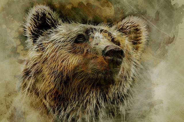 Grizzly, Bear, Kodiak, Head, Portrait, Nature, Predator
