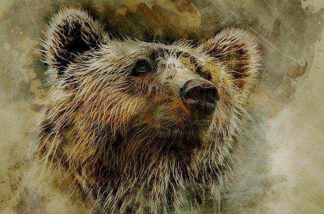 Grizzly, Bear, Kodiak, Head, Portrait, Nature, Predator