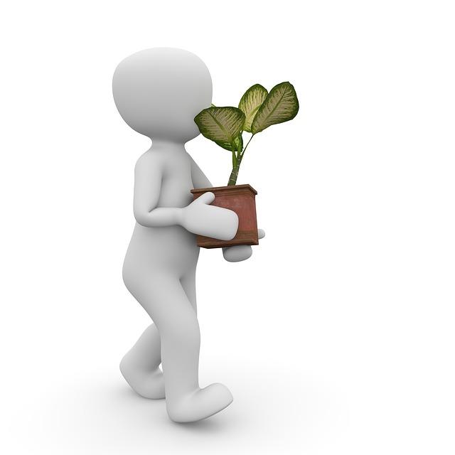 Plant, Pot, Flowers, Flowerpot, Green, Pots, Nature