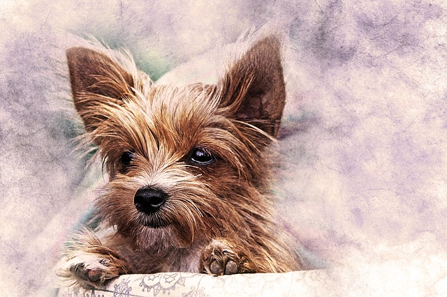 Dog, Puppy, Pet, Art, Nature, Abstract, Watercolor