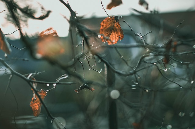 Leaves, Tree, Raindrop, Aesthetic, Late Autumn, Nature
