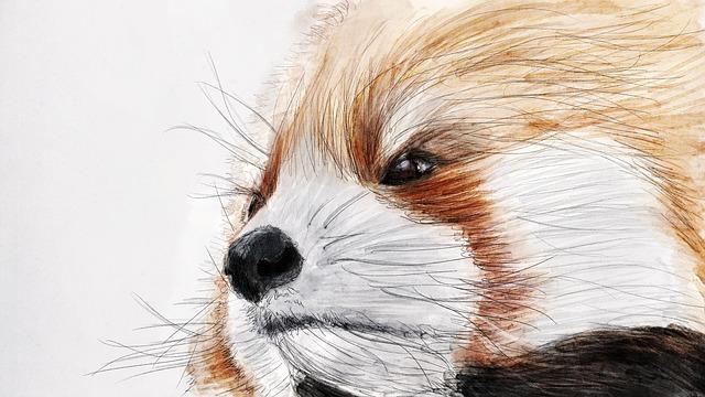 Illustration, Red Panda, The Zoo, Animal, Nature, China