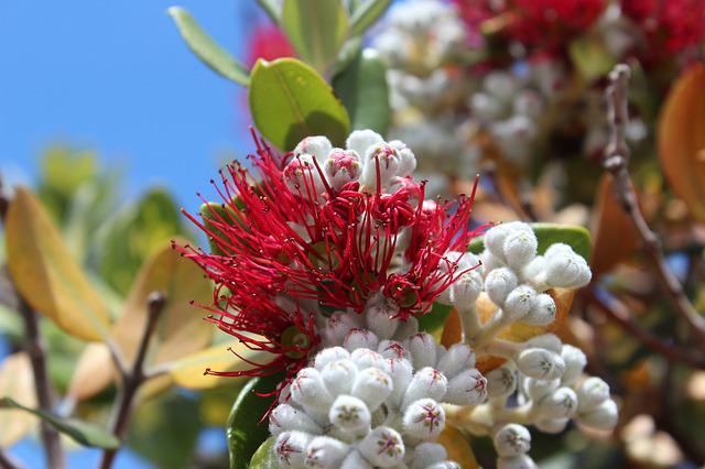 Red Flower, Red, Protea, Flowers, Nature