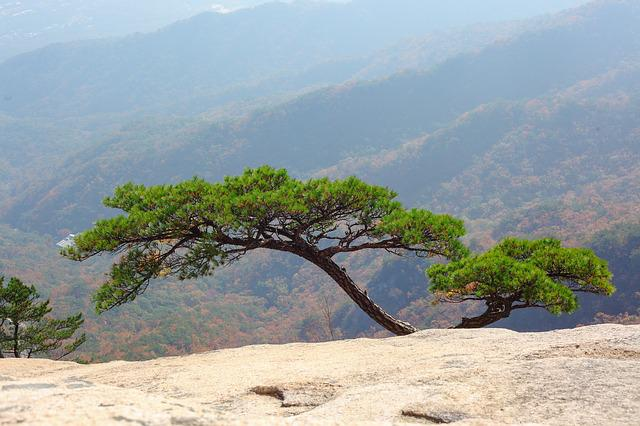 Mountain, Rock, Pine, Nature, Republic Of Korea