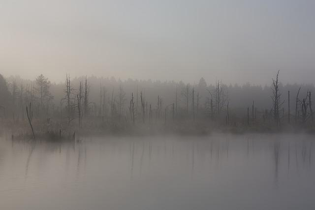 Fog, Moor, Autumn, Swamp, Nature Reserve
