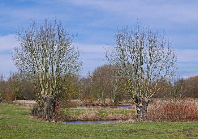 Early Spring In The Biotope, Nature Reserve, Pond