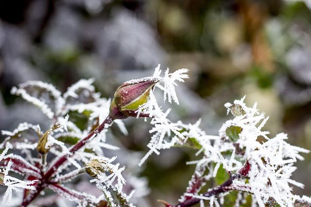 Winter, Icing, Ice, Rime, Slovakia, Nature, Frozen