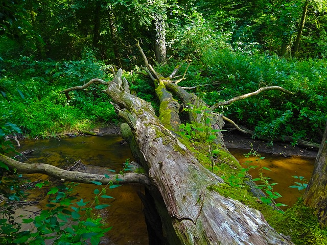 Jungle, Tree, River, Dead Wood, Bridge, Bach, Nature